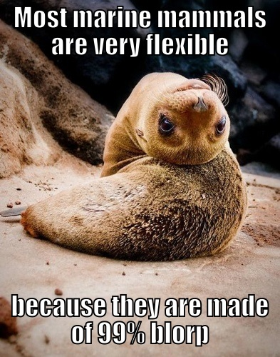 most marine mammals are very flexible because they are made of 99% blorp