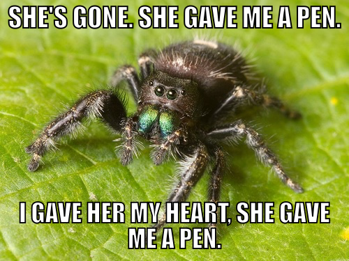 """Adult female Phidippus audax jumping spider in Nashville, Tennessee"" by Kaldari (Own work) [CC0], via Wikimedia Commons, modified by me (dialogue from ""Say Anything"")"