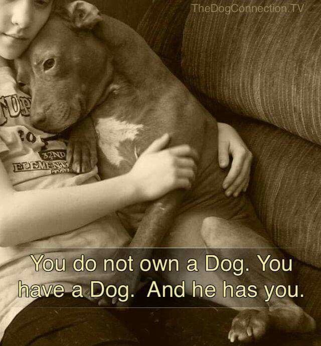 You do not own a Dog. You have a Dog. And he has you. (via ~VeganVibes~ on Pinterest, from TheDogConnection.tv)